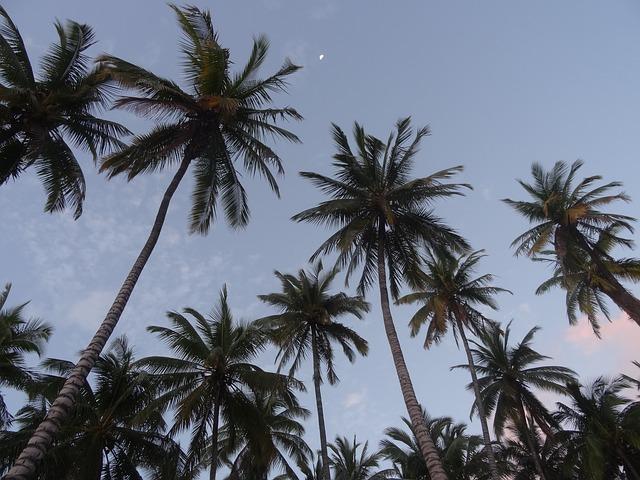 Clear Blue Skies in Los Angeles